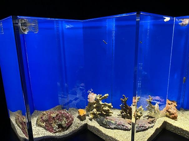 新・足摺海洋館SATOUMI ウミウシ水槽