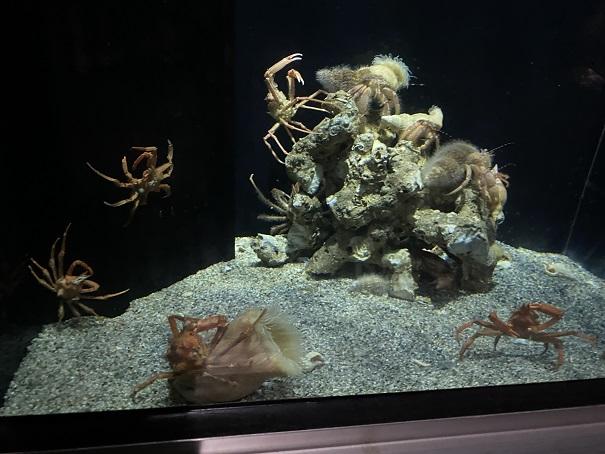 新・足摺海洋館SATOUMI 深海2