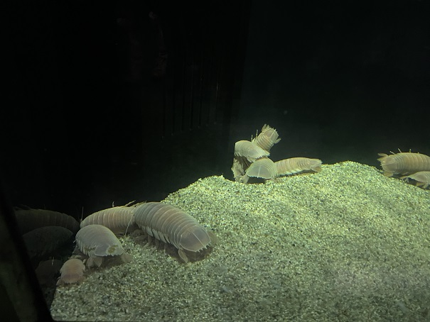 新・足摺海洋館SATOUMI 深海