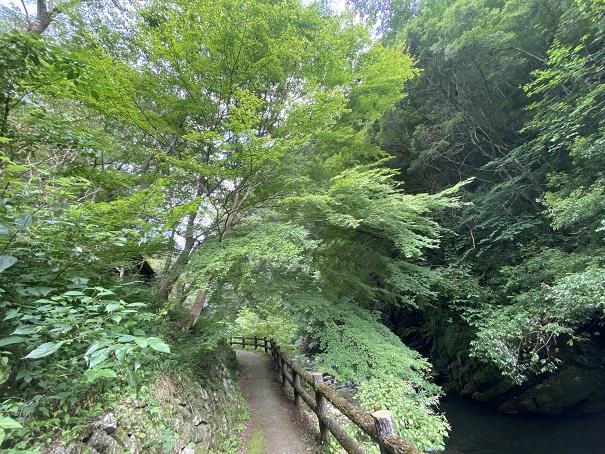 美霞洞渓谷 紅葉