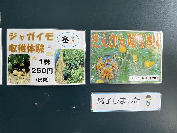 香南アグリーム 収穫体験4