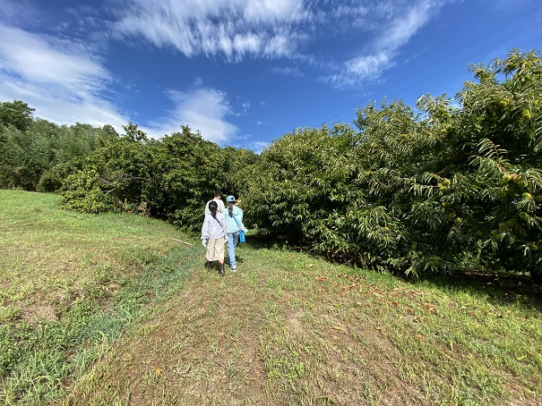 香南アグリーム栗の木