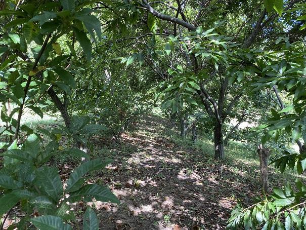 香南アグリーム 栗の木