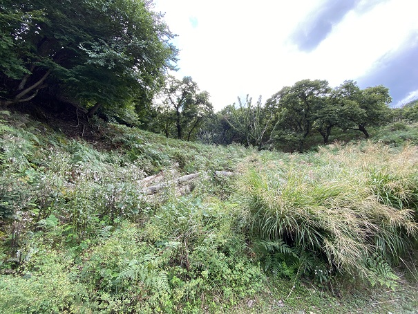 中尾山栗園 栗の木の場所