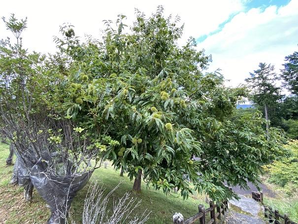 平成荘 栗の木1