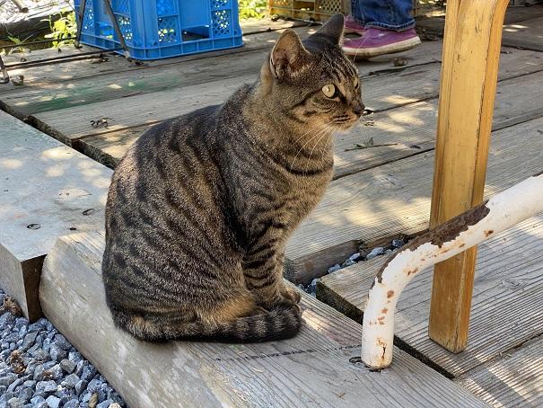 土本観光果樹園 猫