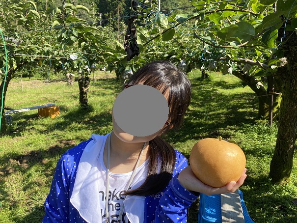 土本観光果樹園 土佐のりょうま梨