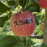 正岡観光りんご園 りんご