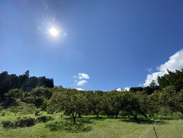 狩場苑 栗園