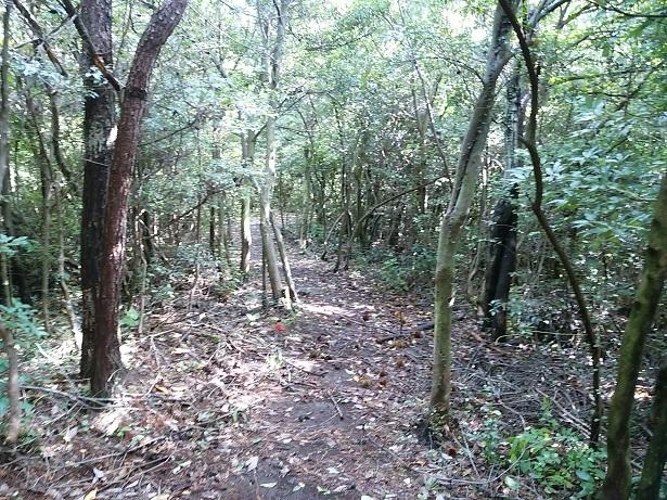 五色台森の中遊歩道栗拾い