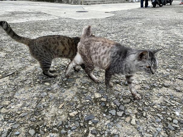 伊吹島の猫 港2