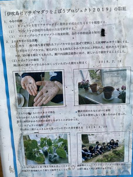 伊吹島 アサギマダラプロジェクト2