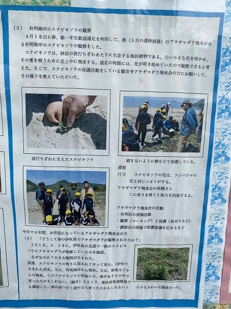伊吹島 アサギマダラプロジェクト1