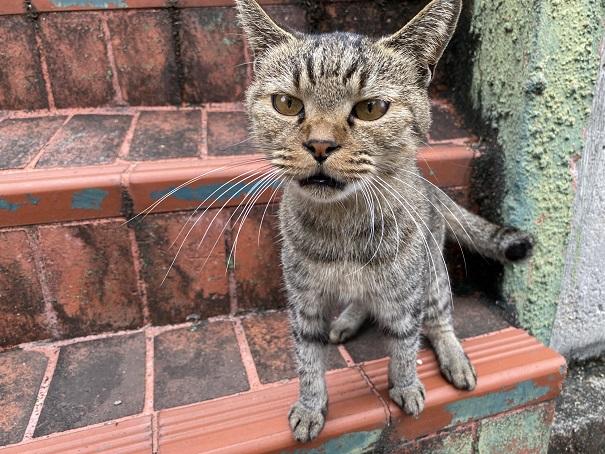 伊吹島 港近くの猫