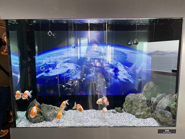 ソラキン 宇宙の金魚