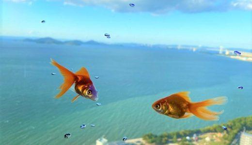 ソラキン(SORAKIN)  ゴールドタワー 空を泳ぐ金魚やニモ 宇多津町