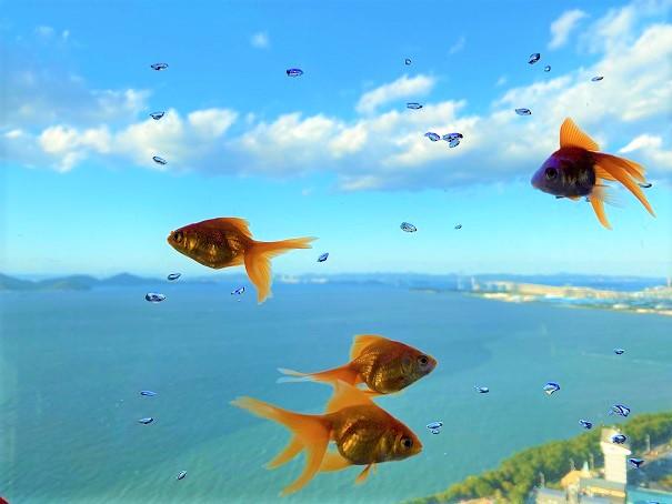 空を泳ぐ金魚ソラキン