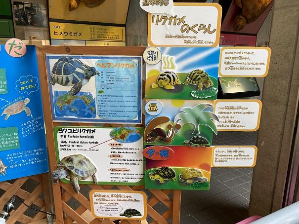 日和佐うみがめ博物館カレッタ リクガメの暮らし