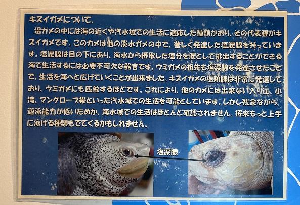 日和佐うみがめ博物館カレッタ 亀について