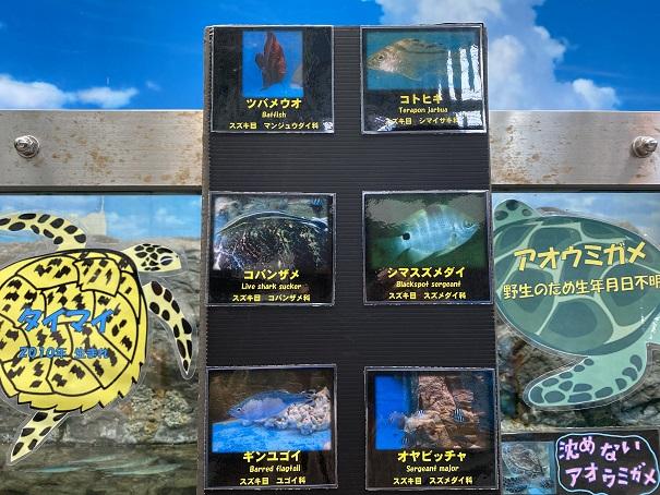 日和佐うみがめ博物館カレッタ 魚1