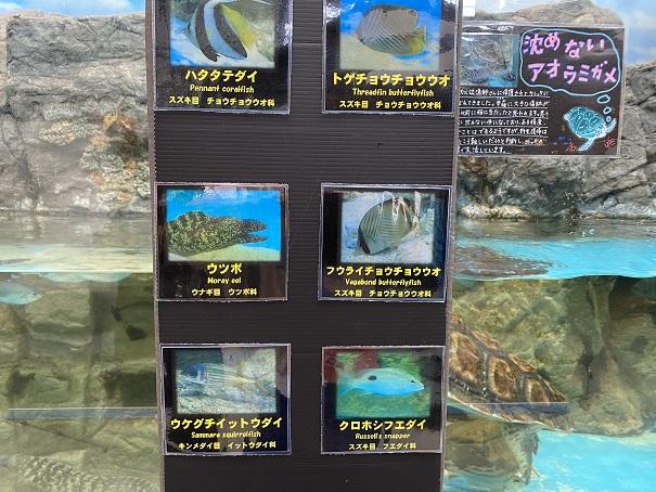 日和佐うみがめ博物館カレッタ 魚2