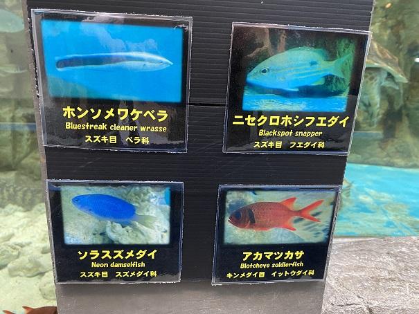 日和佐うみがめ博物館カレッタ 魚3