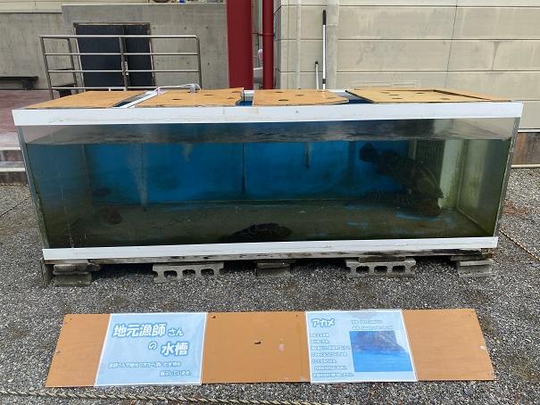 日和佐うみがめ博物館カレッタ 漁師の水槽