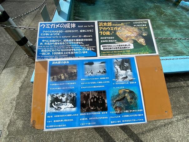 日和佐うみがめ博物館カレッタ 70歳の亀