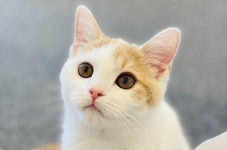 Cat Living NANA(キャットリビングナナ) 猫カフェオープン 宇多津町