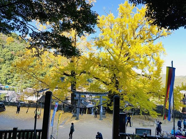 岩部八幡神社 大銀杏階段から