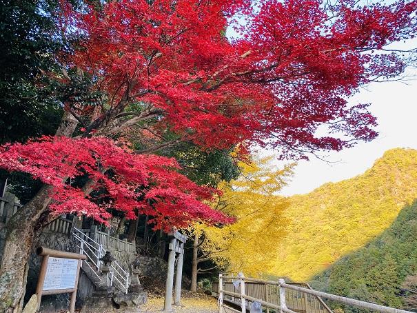 棒賀神社 紅葉