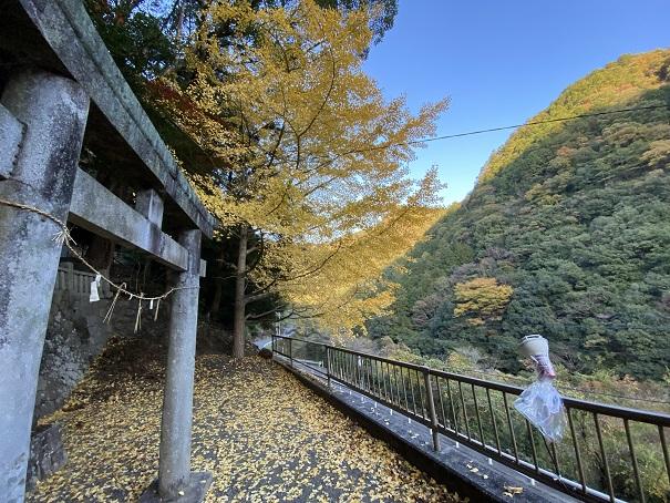 棒賀神社 ライトアップ