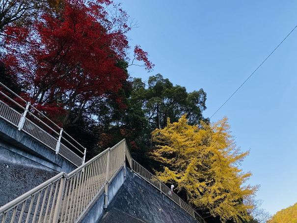 棒賀神社 階段