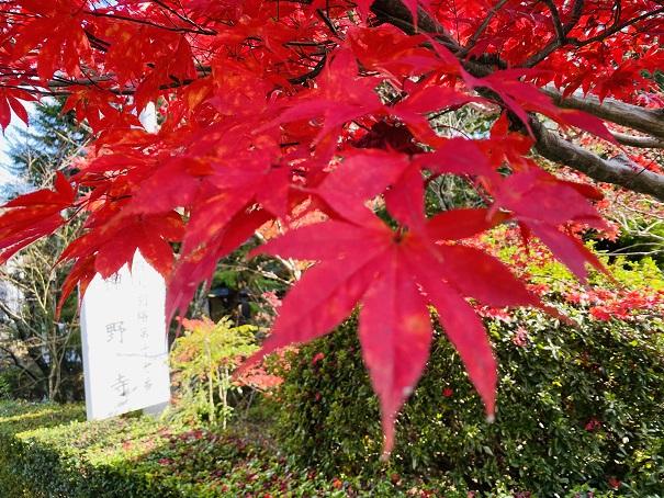 神野寺 道路沿いの紅葉