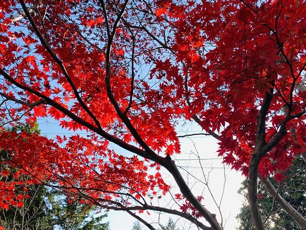 神野寺 道路沿いの紅葉2