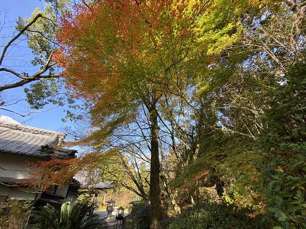 神野寺 本堂奥のもみじの木