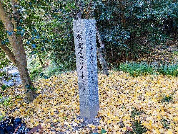 釈迦堂のイチョウ 香川の保存木2
