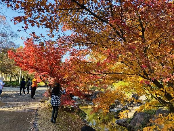 香川用水記念公園 紅葉