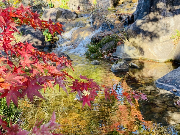 香川用水記念公園 紅葉2