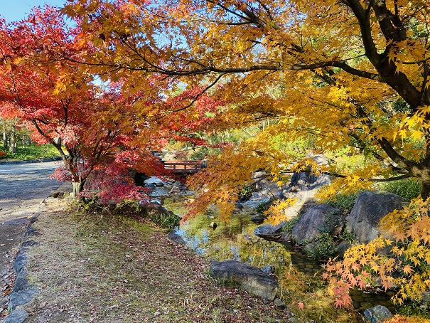 香川用水記念公園 紅葉3