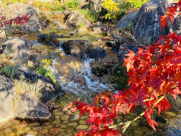 香川用水記念公園 紅葉4