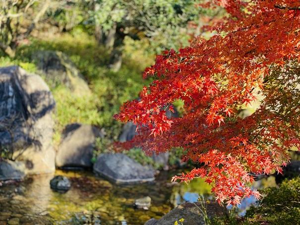 香川用水記念公園 紅葉6