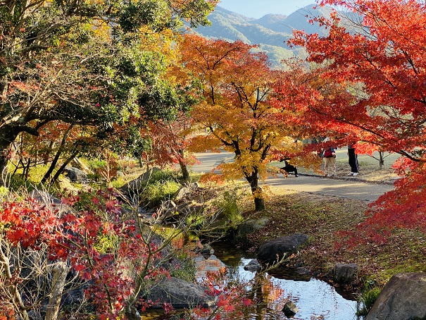 香川用水記念公園 紅葉せせらぎ川