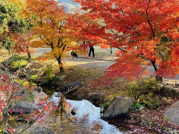 香川用水記念公園 紅葉橋からの景色