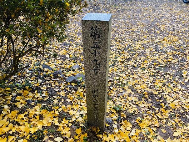 薬師院のイチョウ 香川の保存木石碑裏