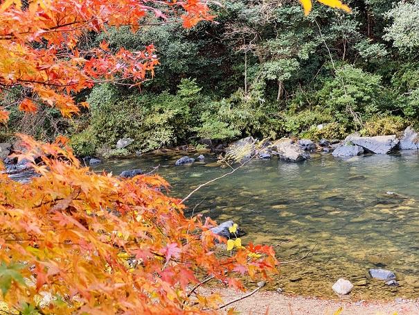 宇甘川と紅葉 1