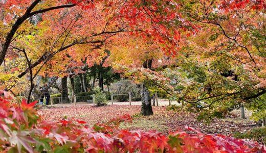 近水園 秋のもみじ 銀杏の紅葉が美しい 岡山県岡山市の名勝