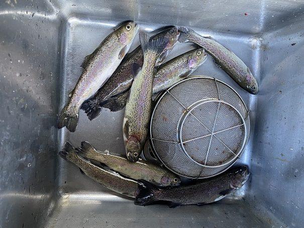 阿波フィッシングパーク 釣れた魚