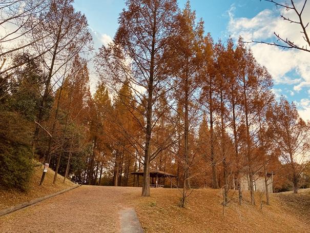 メタセコイヤの森