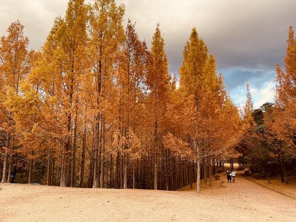太古の森メタセコイヤの森